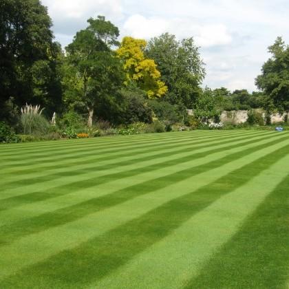 Amenity Grass image