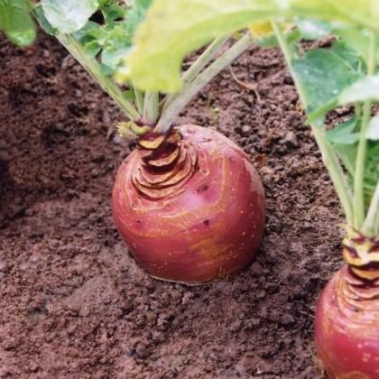 Forage Crops image