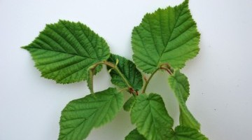 Trees & Hedging Bundles Available from Hubbards Seeds