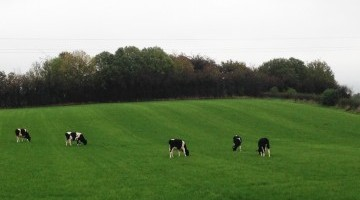 Top Grass Yields in Yorkshire