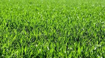 Overseeding Grassland - Simple Steps