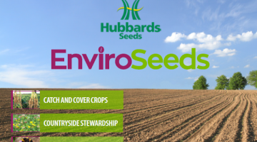 Environmental Seed from Hubbards