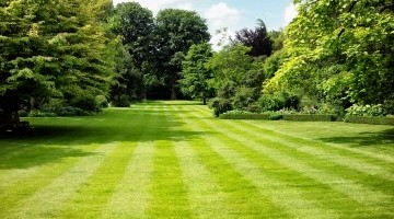 Hubbards Lawn Seed – Getting Results
