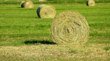 Grassland Opportunities for Arable Farmers